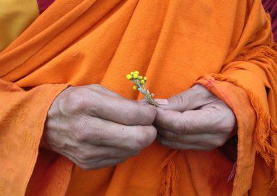 Ajania nubigena dans les mains de lama Dodé