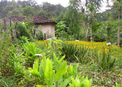 Jardin d'un agent de santé au Honduras