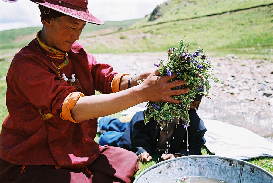 Lavage des plantes médicinales-Tibet