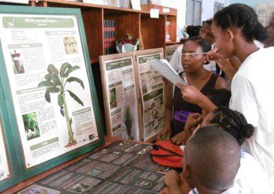 Elèves du lycée mixtes devant les monographies de plantes – à Diégo-Suarez, Antsiranana, Madagascar 2